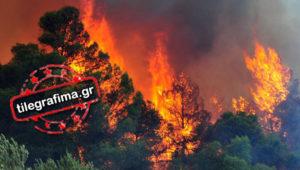 Ποινική δίωξη στον 46χρονο Αλβανό για τη φωτιά στην Ηλεία